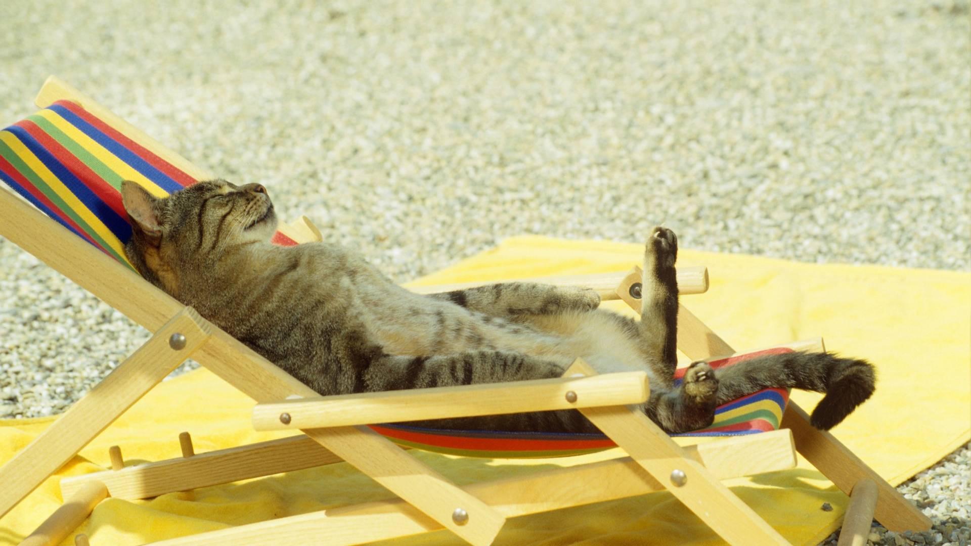 Кошак в творческом кризисе